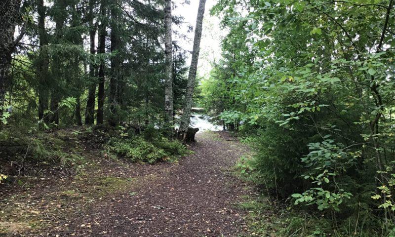 Lammelle johtava metsäpolku.